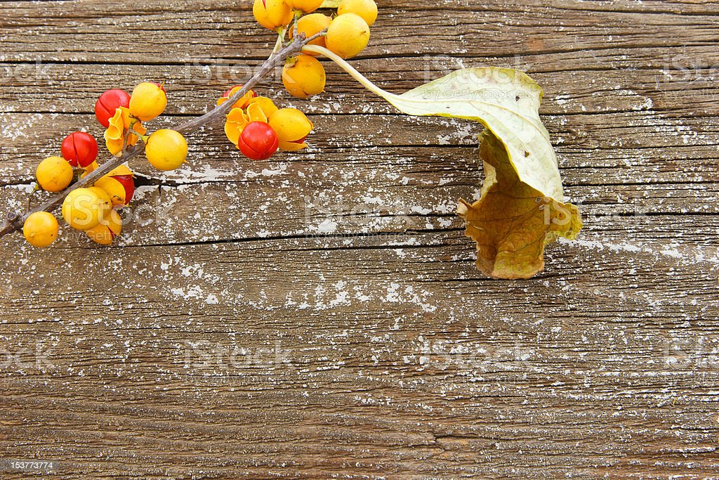 Charming background with Bittersweet Berries stock photo