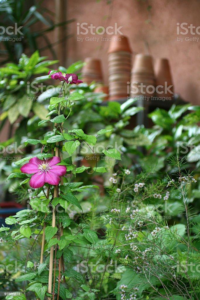 Charming Italian garden setting royalty-free stock photo