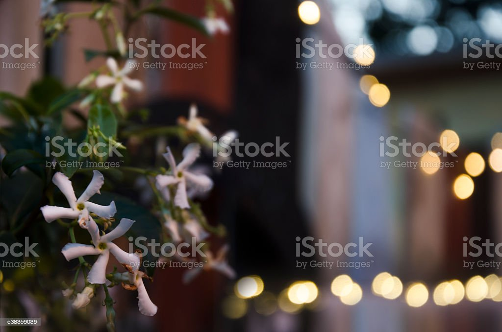 Charming Jasmine Fence Twilight stock photo