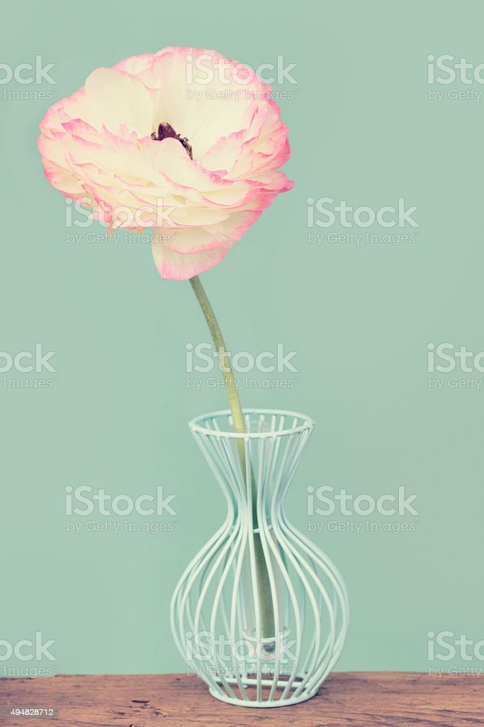 Charming persian buttercup flower in a blue vase on wood stock photo