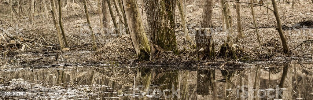 Charming spring forest stock photo