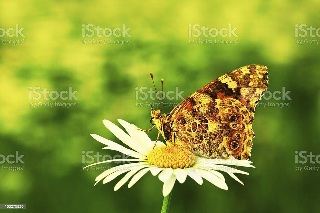 Charming summer royalty-free stock photo