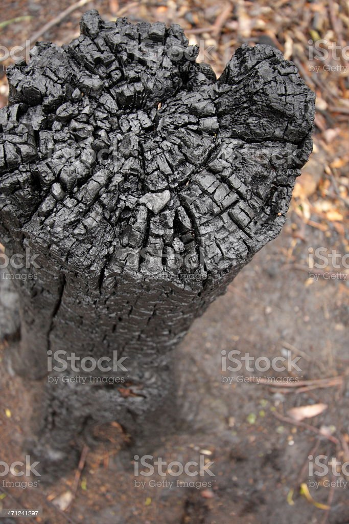 Charred Tree Stump royalty-free stock photo