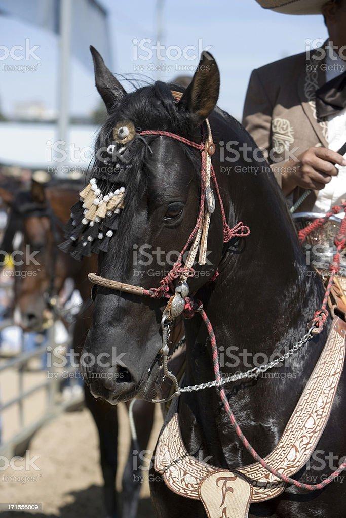 Charro Horse royalty-free stock photo