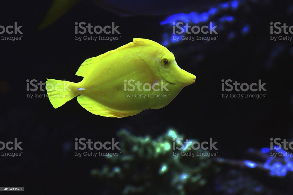 Chartreuse Fish stock photo