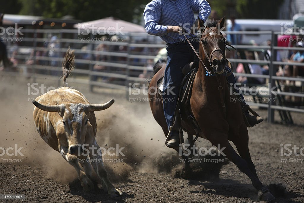 Chasing a Rodeo Steer - Dust Flying royalty-free stock photo