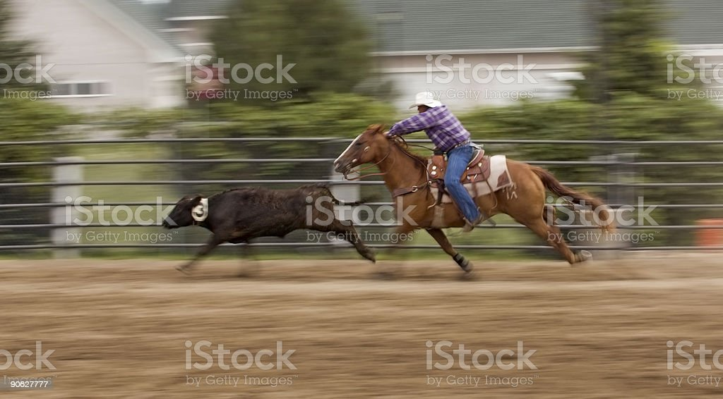 Chasing Down the Cow Panning and Motion Blur royalty-free stock photo