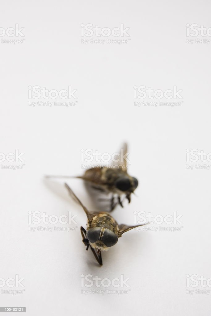chasing insects stock photo