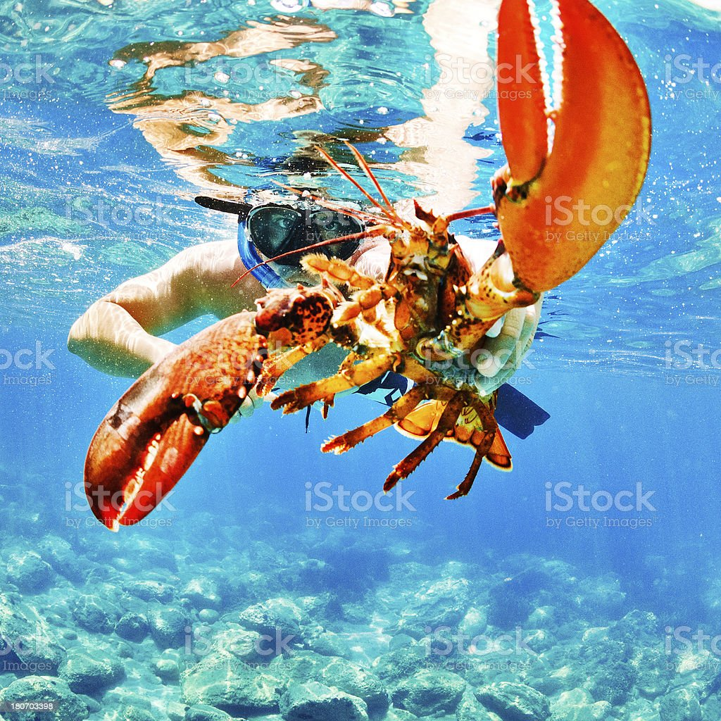 Chasing the crab royalty-free stock photo
