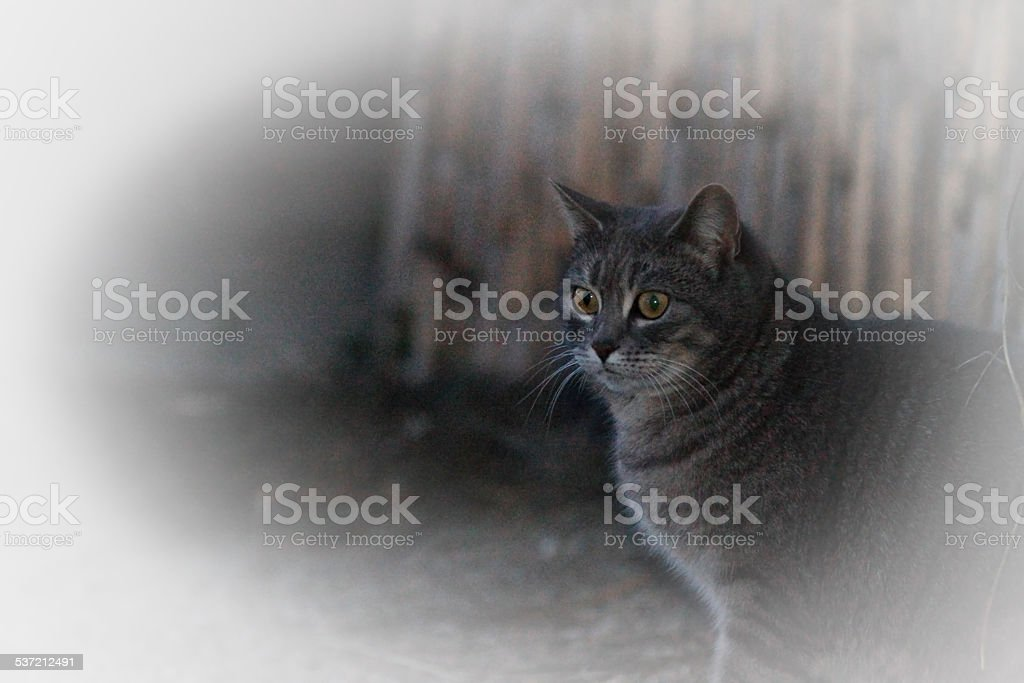 chat à l'affût stock photo