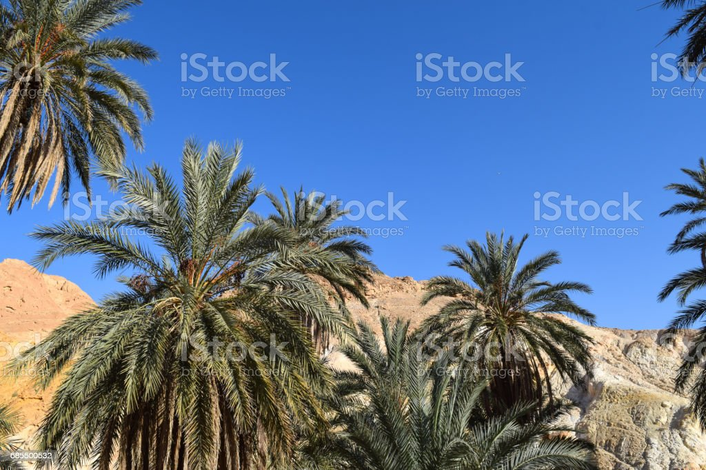 Chebika oasis in the mountains of Tunisia. Flora of North Africa stock photo