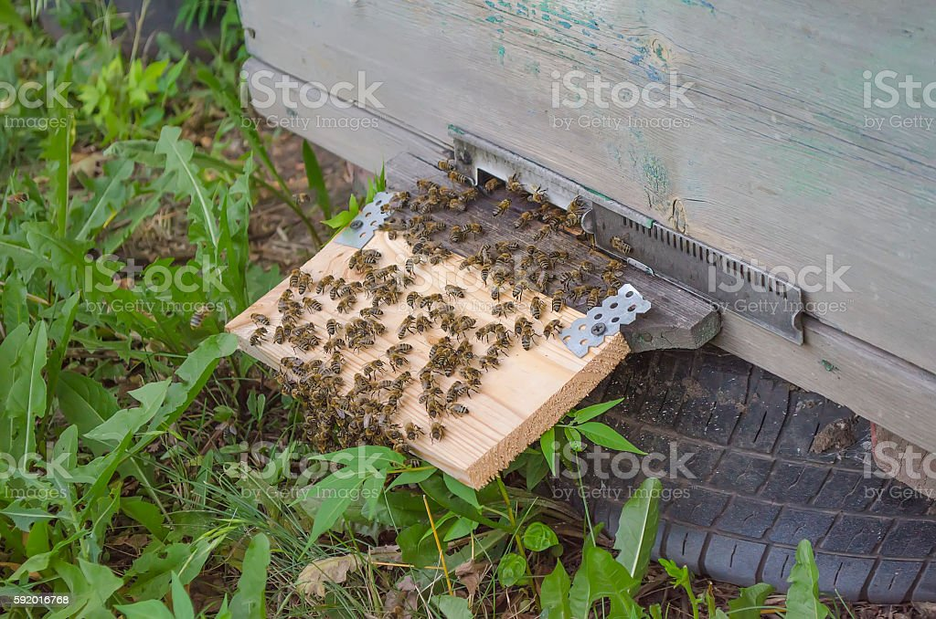 check of the equipment on an apiary stock photo