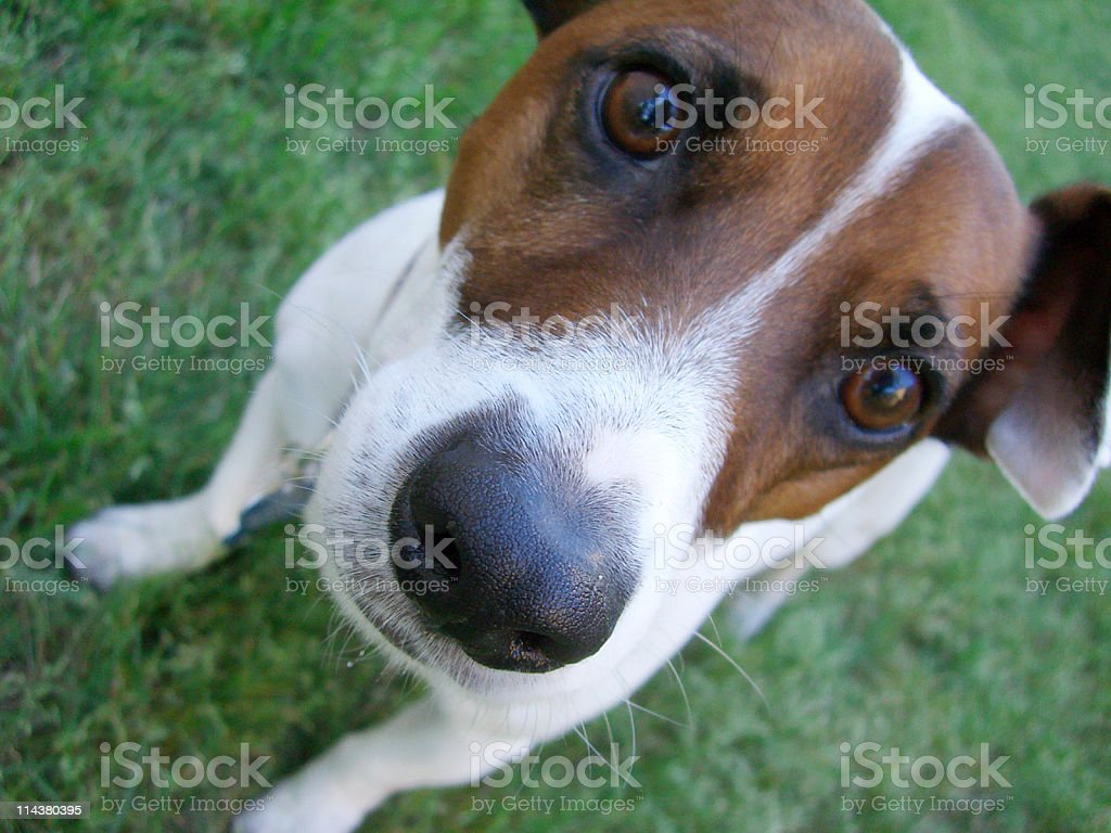 Check out my nose! stock photo