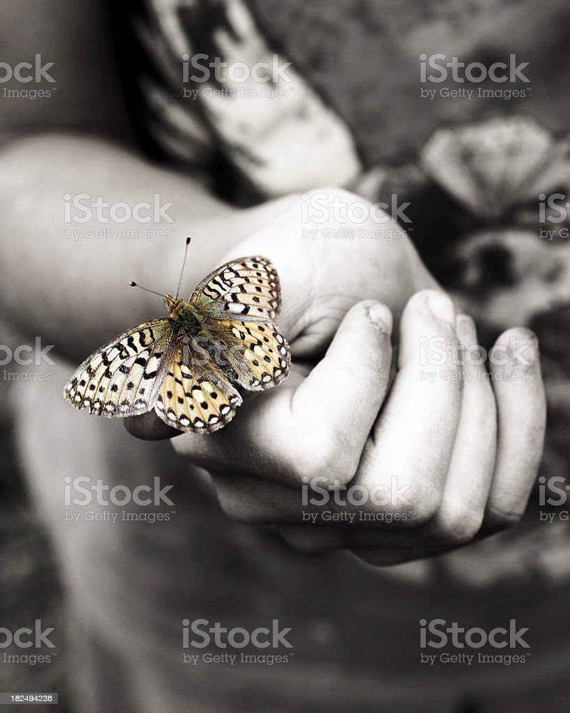 Checkerspot Butterfly royalty-free stock photo