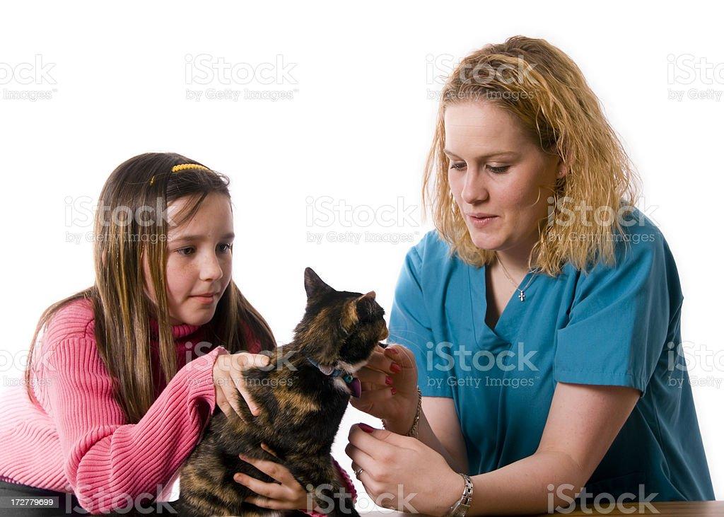 Checking Kitty royalty-free stock photo