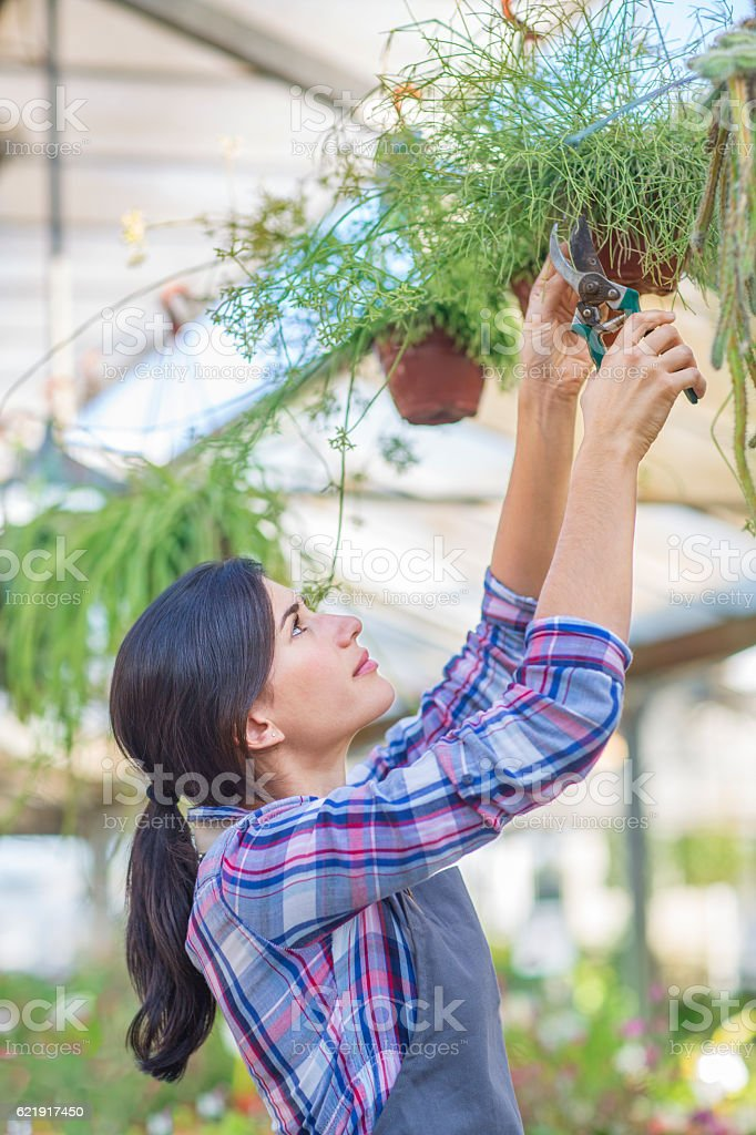 Checking on hanging baskets stock photo
