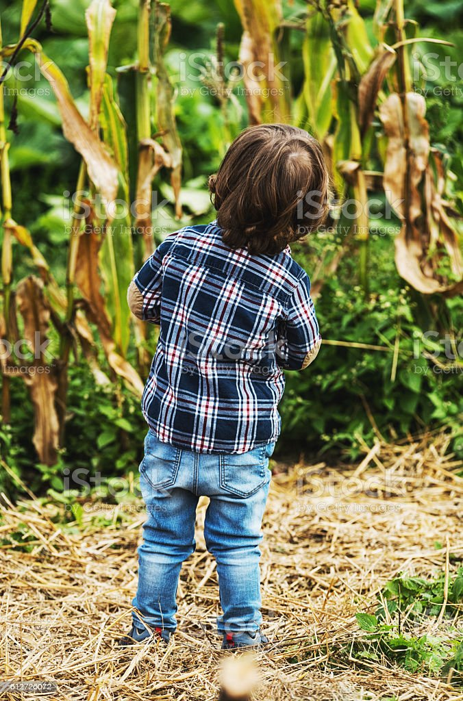 Checking on the Corn stock photo