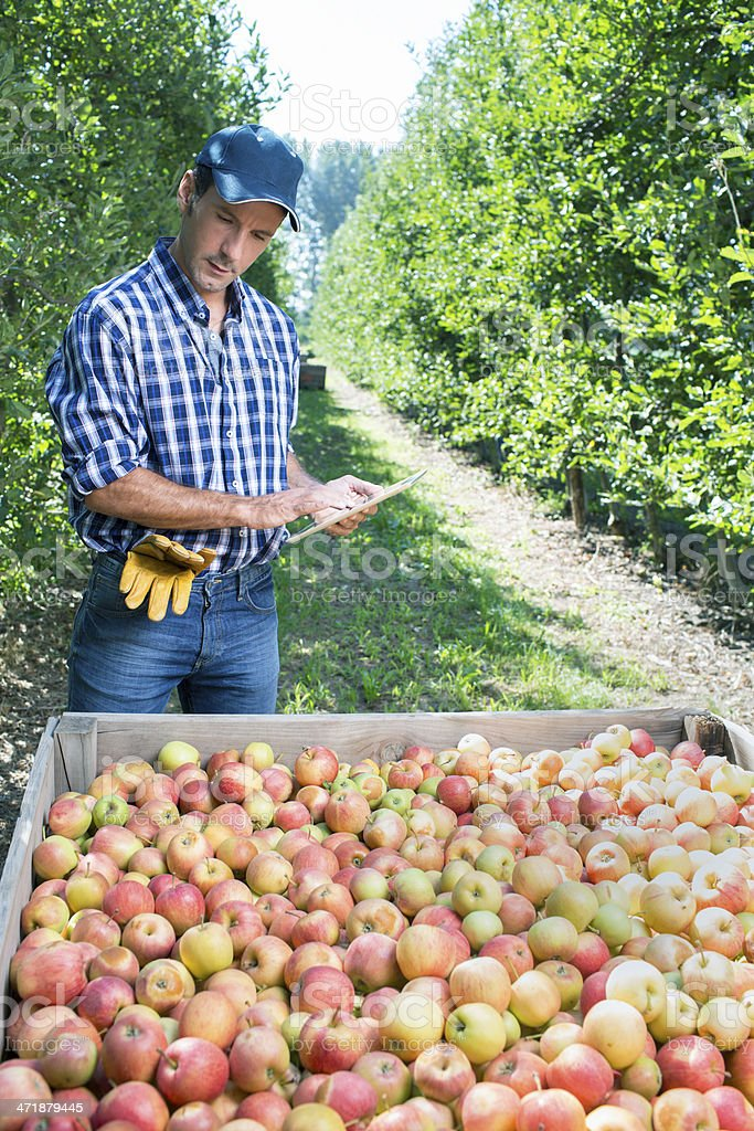Checking the fruit stock photo
