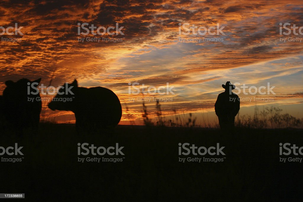 Checking the Herd at Sunset stock photo