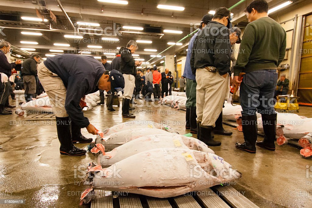 Checking the quality of the tuna fish stock photo