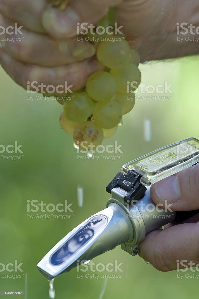 Checking The Sugar Contest Of Grape stock photo