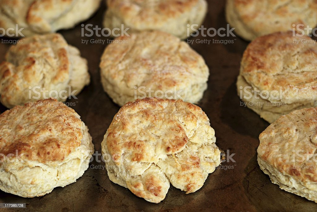 Cheddar cheese biscuits royalty-free stock photo