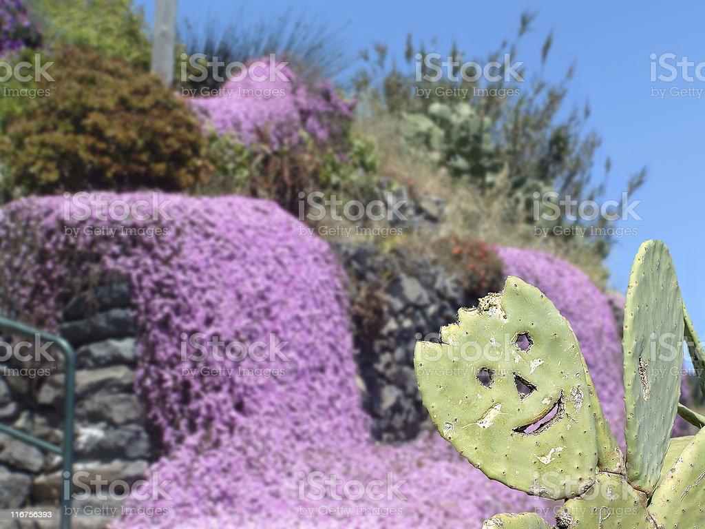 Cheeky cactus royalty-free stock photo