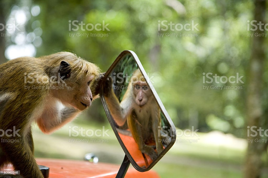 Cheeky monkey looking at it's reflection stock photo