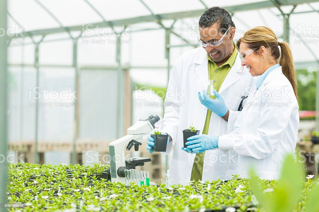 Cheerful biologists working in a greenhouse stock photo