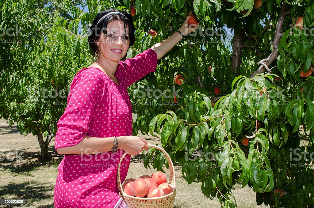 Cheerful brunette picking fruits stock photo