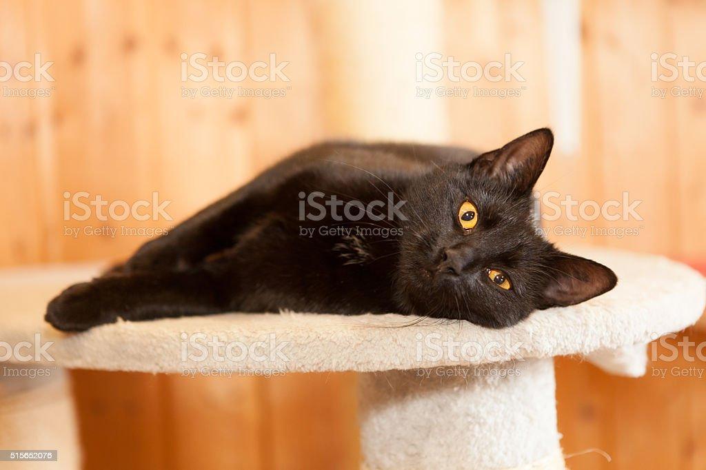 cheerful cat stock photo