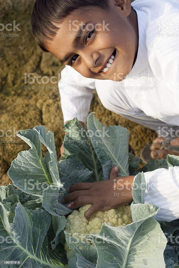 Cheerful Indian Boy with Cauliflower Plant in Morning. royalty-free stock photo