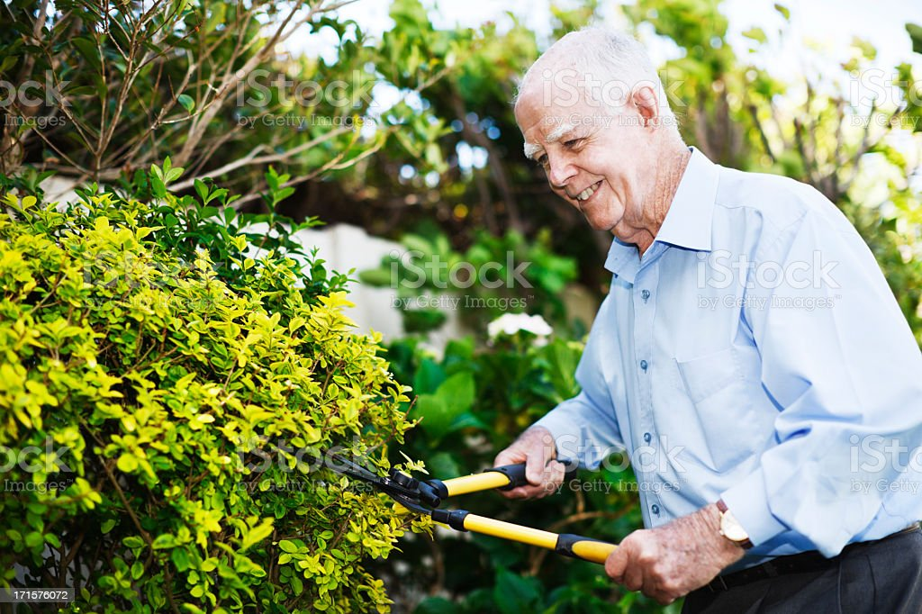 Cheerful man in his 80s smilingly clips the garden hedge stock photo