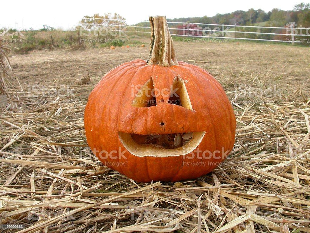 Cheerful Pumpkin royalty-free stock photo
