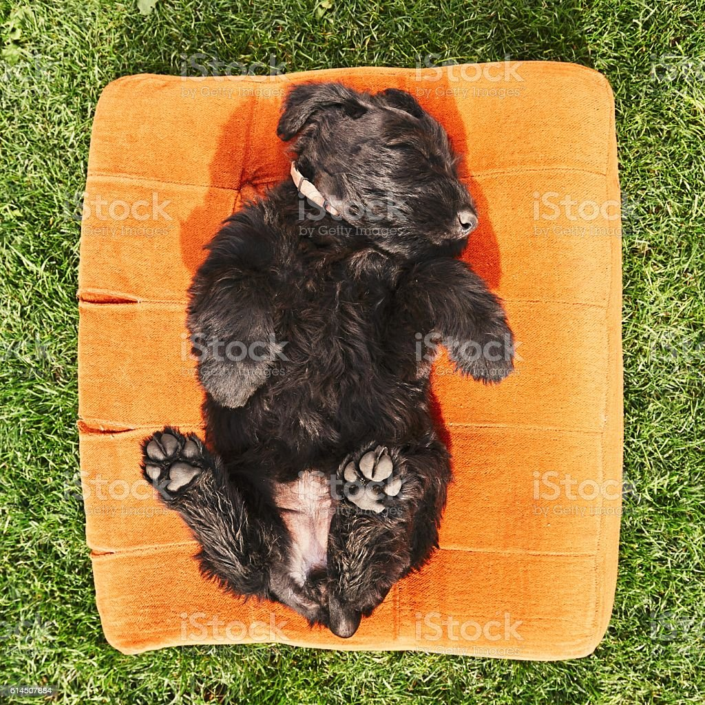 Cheerful puppy dog stock photo