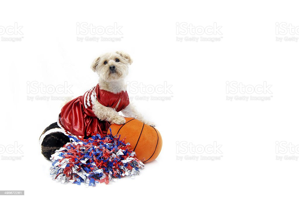 Cheerleading Canine Style royalty-free stock photo