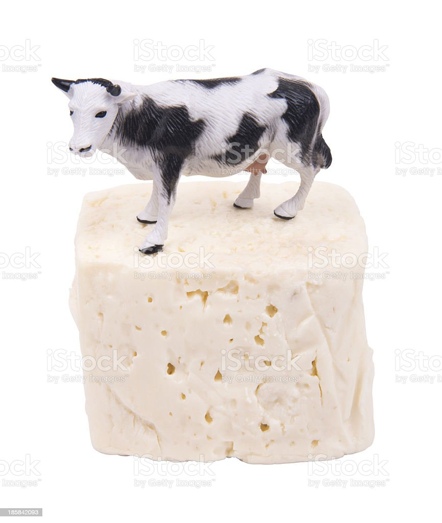 Cheese And Cow stock photo