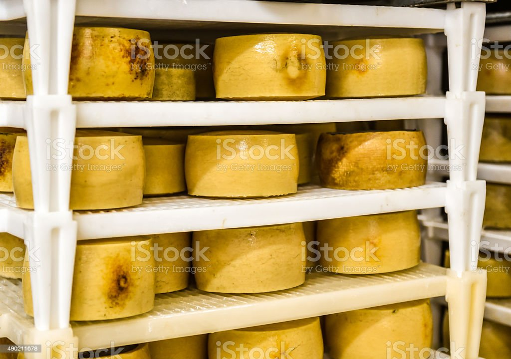 Cheese factory warehouse with shelves stacked with cheese stock photo