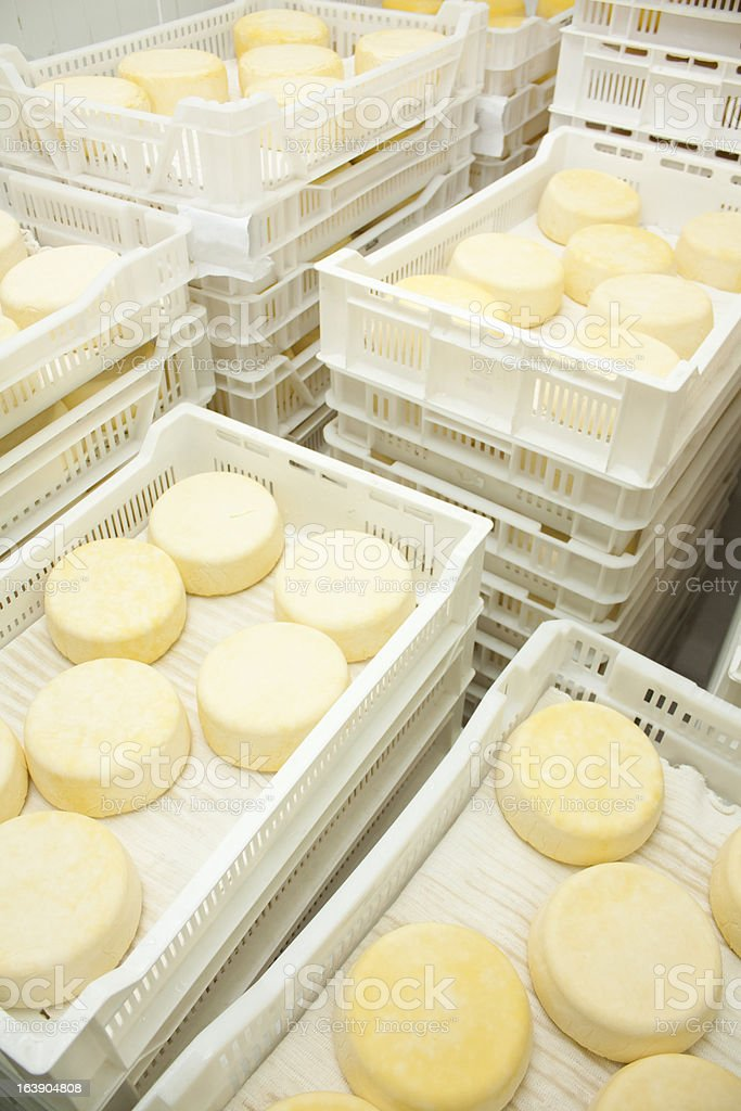 Cheese in curing process. stock photo