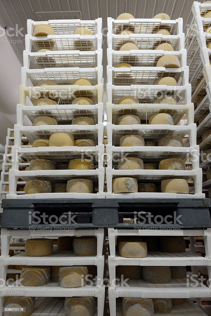 Cheese maturing in a dairy stock photo