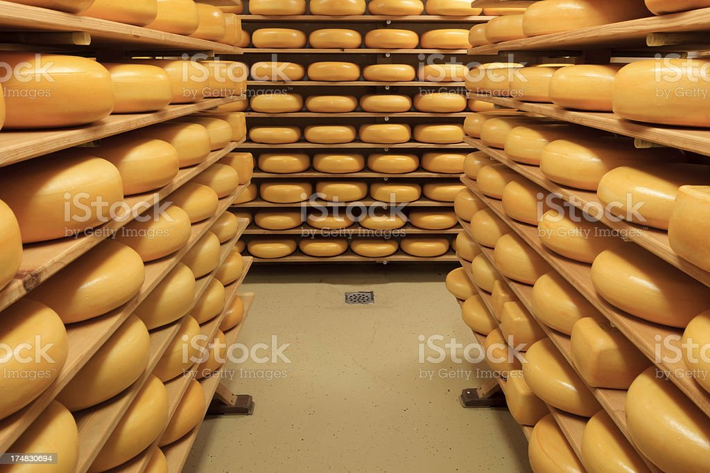cheeses on the shelves at a dairy farm stock photo