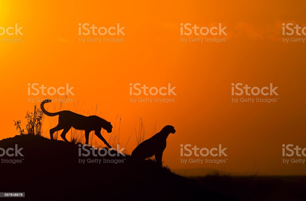 Cheetah Cub with Mother Silhouette stock photo