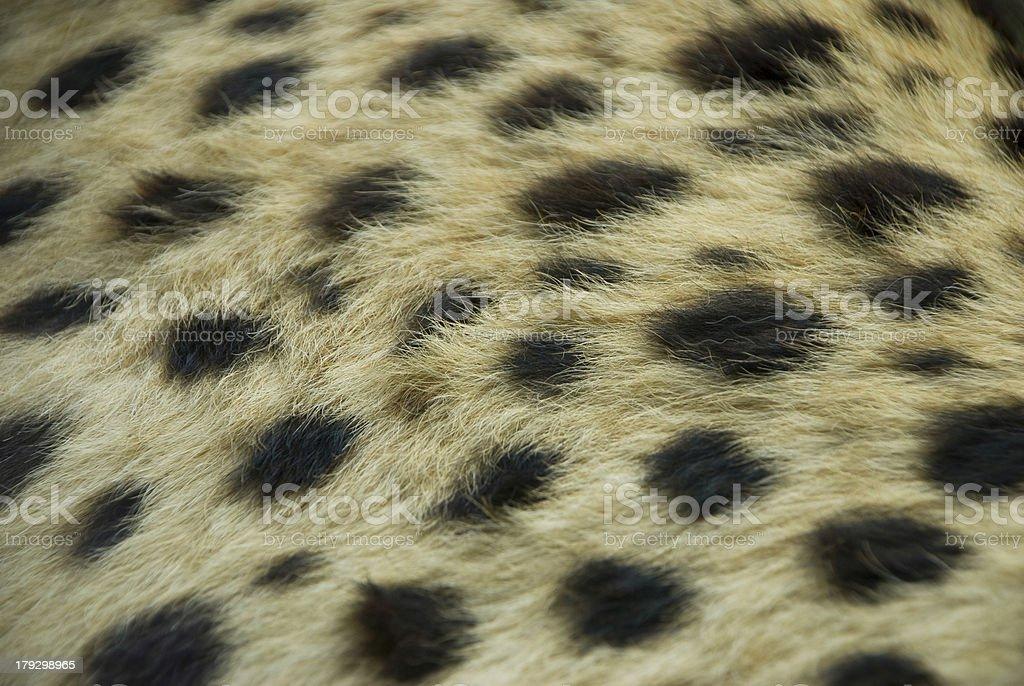 Cheetah Fur stock photo
