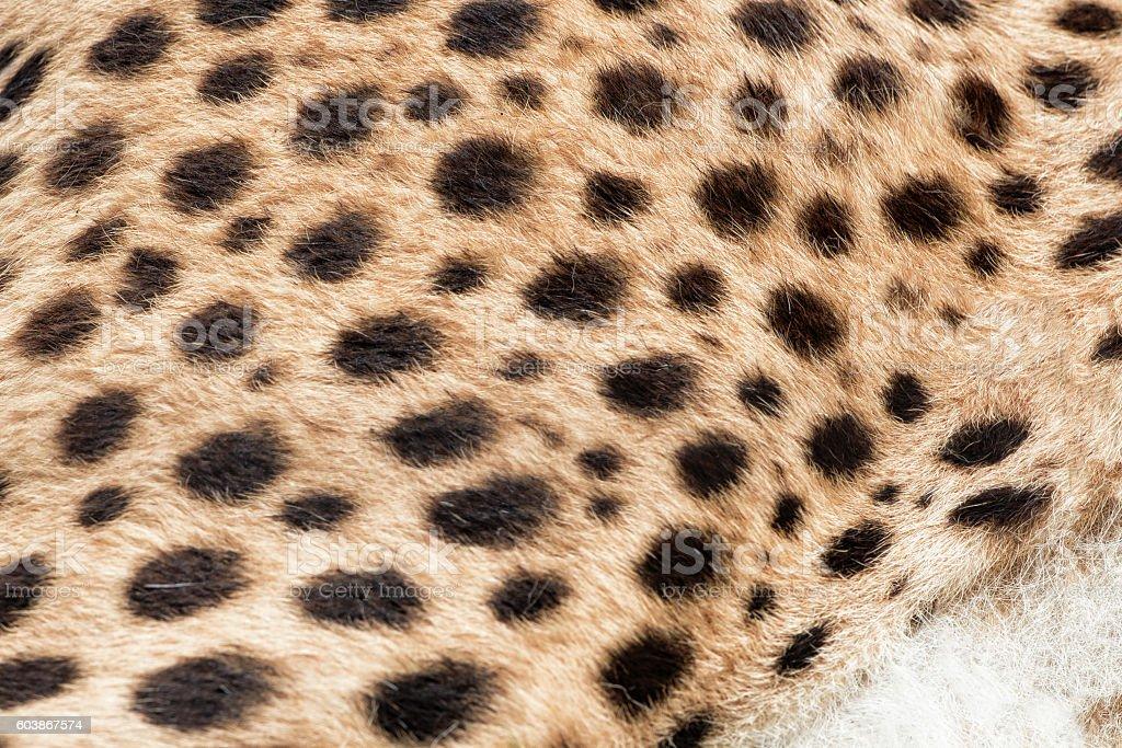 Cheetah fur print close up stock photo