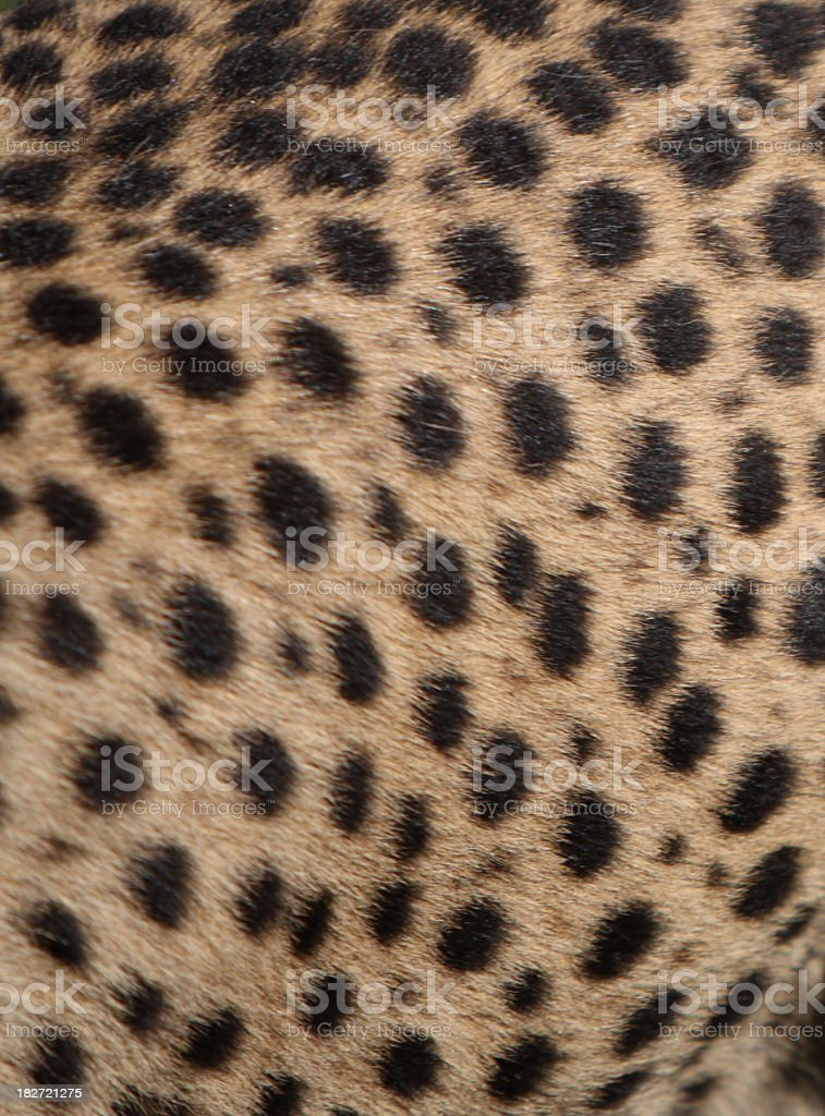 Cheetah skin stock photo