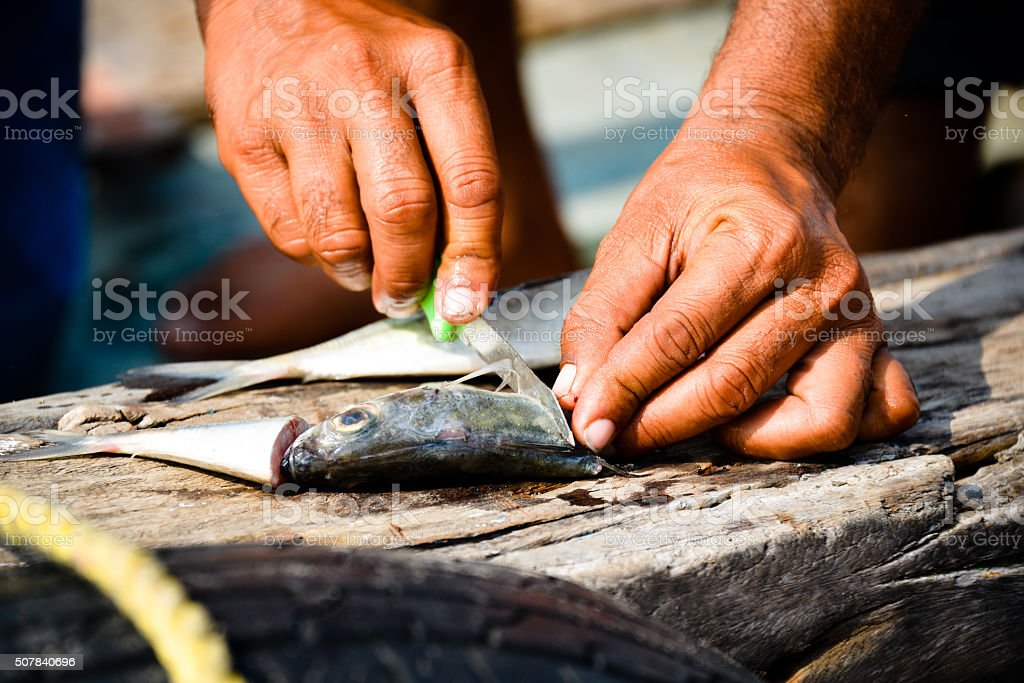 Chef Cutting salmon fish stock photo