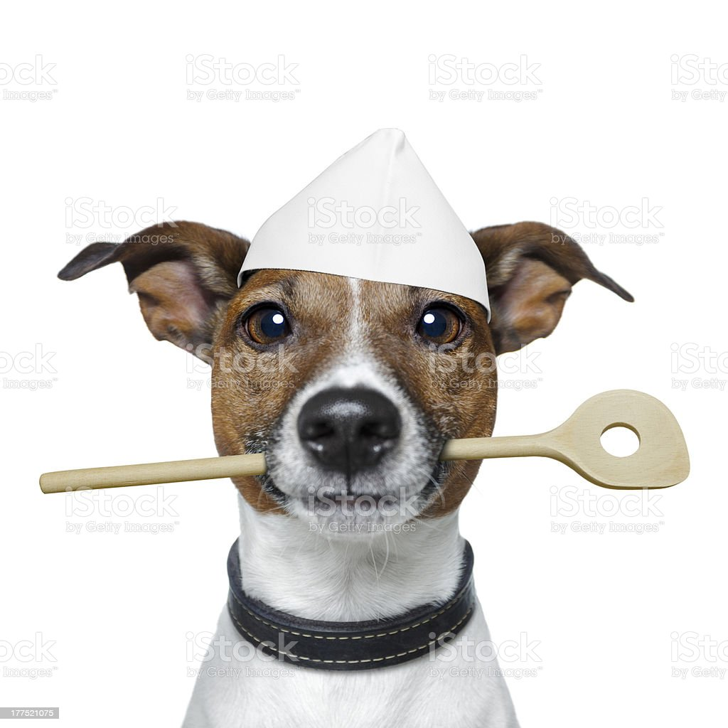 chef dog with cooking  spoon royalty-free stock photo