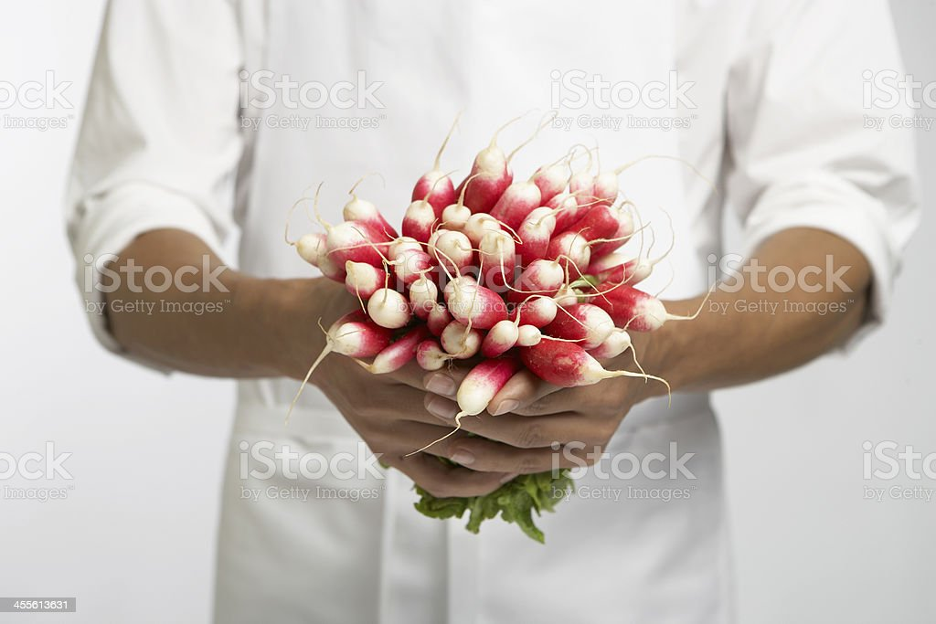 Chef holding bunch of radishes (mid section) royalty-free stock photo