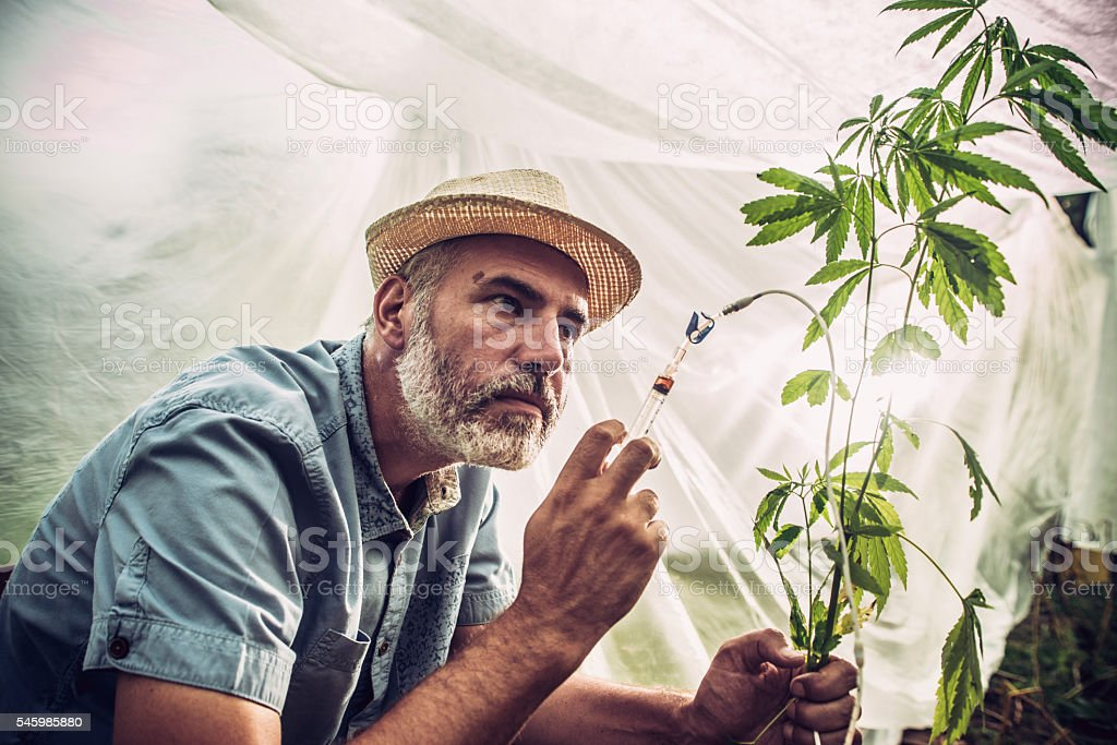 Chemical Modification of Hemp plant stock photo