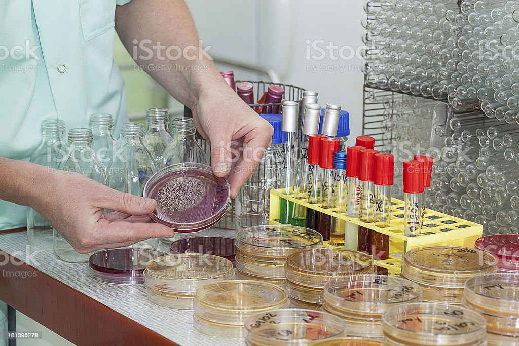 Chemist working with bacteria royalty-free stock photo